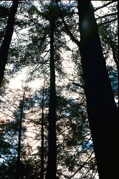 2004_TreeCanopy