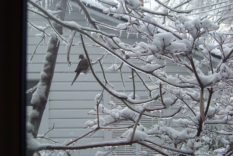Starting late on January 25, the mother of all ice storms hit Kentucky, raining down loads of tree-felling ice, then topping that off with several inches of heavy snow. Patti ventured out with the camera four days later.