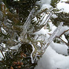 No, Patti was not standing on her head to take this picture...these icicles formed when our tree was still upright...