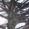 The break in the cypress