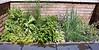 july herbs