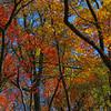 trail foliage at Deep Creek Lake, Maryland