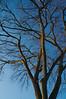 Side Lit Tree