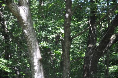 07-31-11 Hawk in the Yard