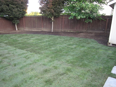 Backyard after landscaping