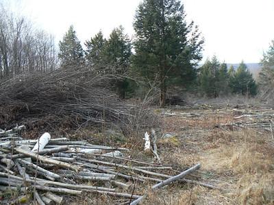 Brush Pile - 1/4/2007