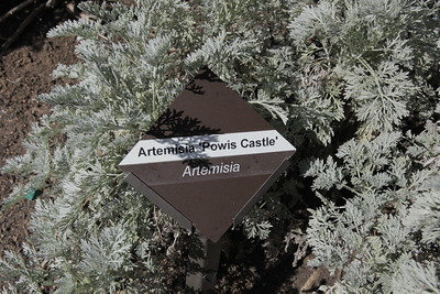 Cuyamaca College Native Plants