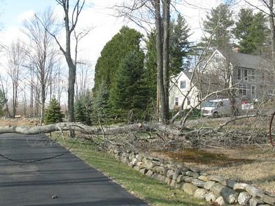 Fallen Tree 4/21/2011
