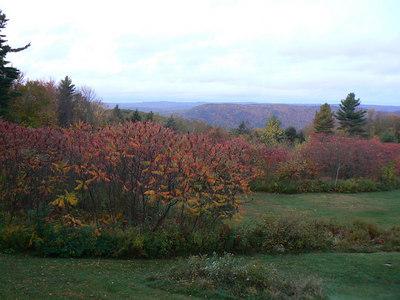 Foliage - 10/11/2006
