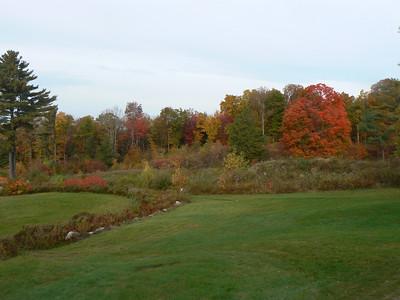Foliage - 10/13/2008