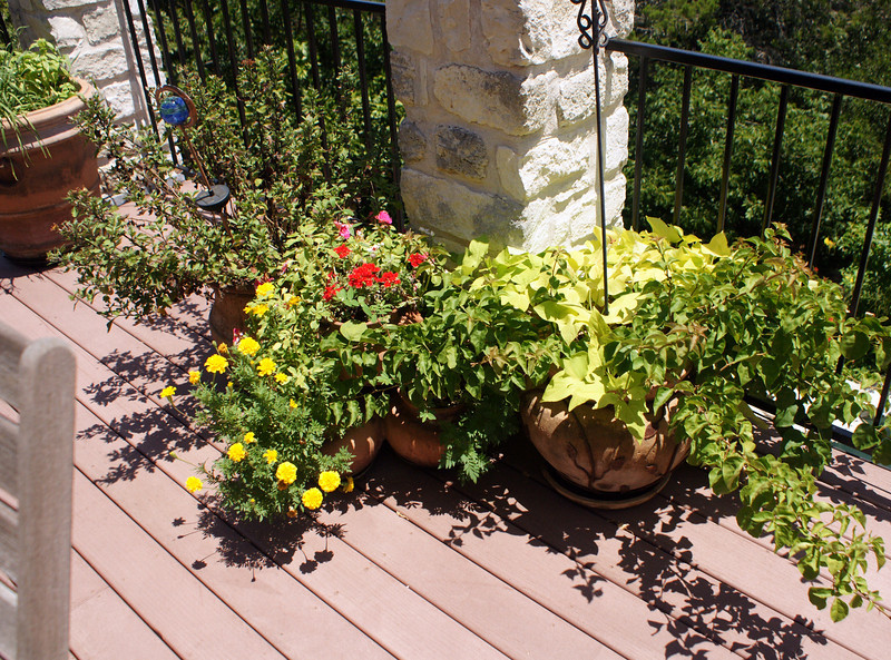 Main deck 2nd column pots: Chrysanthemum, impatiens+petunias+merigolds, potato vine+bouganvilla