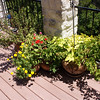 Main deck 2nd column pots: Chrysanthemum, impatiens+petunias+merigolds, potato vine+bouganvilla