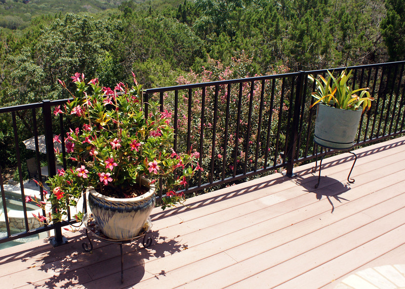 Master deck: Red Mandevilla,  amaryllis (July)