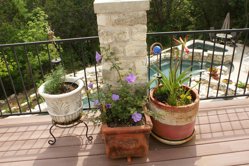 Main deck 3rd column pots: rosemary, purple hibiscus, amaryllis, (March)