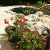 Left side of source pond: (Back to front) Peach hibiscus, day lily, petunias, amaryllis, pink mandevilla (March)