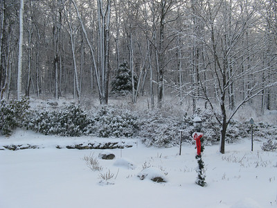 Snow - 1/8/2009