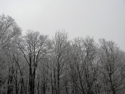 Snow - 2/7/2008