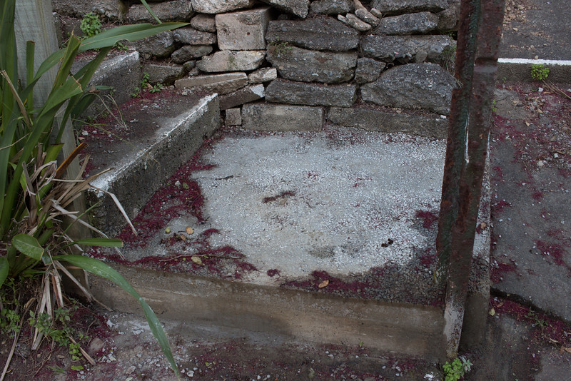 The new bottom step with the boxing off... and a mountain of pohutukawa flowers from the gale force winds yesterday.