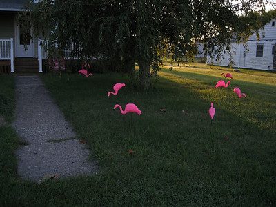 We Got Flocked! - old house