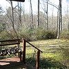 outside garden & forest - from basement deck