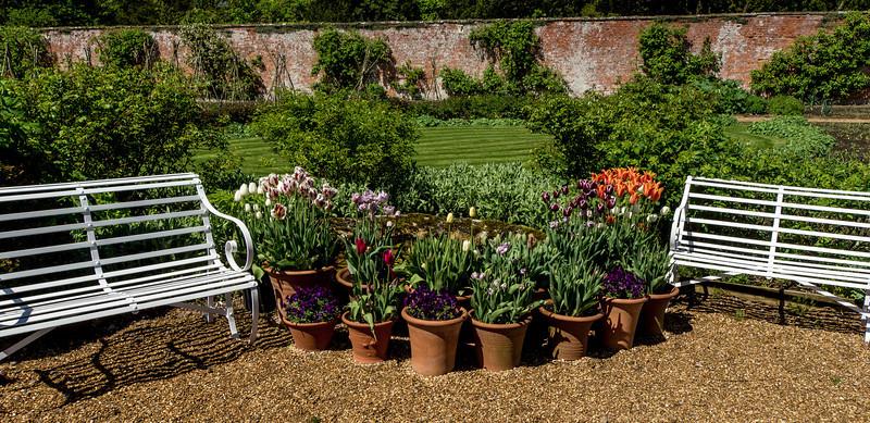 Potted plants, Kelmarsh Hall, Northamptonshire