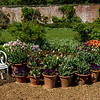 Potted plants, Kelmarsh Hall, Northamptonshire