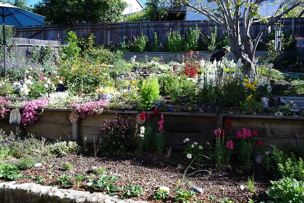 Florence House Garden