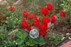 459 Roses