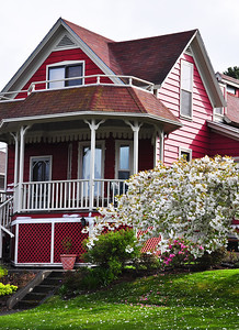 red-house-blossoms-2