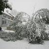 A neighbor's tree