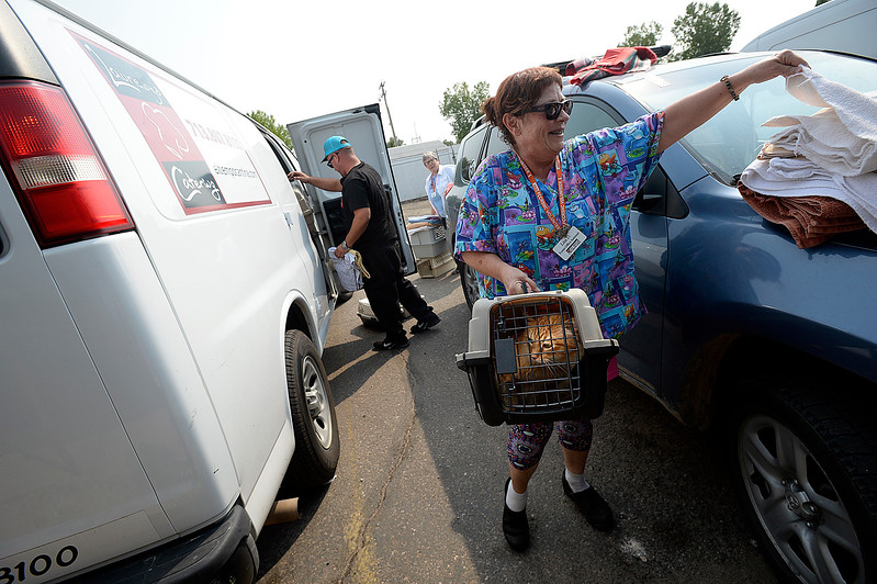 Volunteer Lisa Dobel grabs a towel to cover a cat carrier as she takes the cat into the Fort Collins Cat Rescue Friday, Sept. 8, 2017, after it was unloaded from a van. The cat rescue received 52 cats and kittens from a shelter in Houston.  (Photo by Jenny Sparks/Loveland Reporter-Herald)