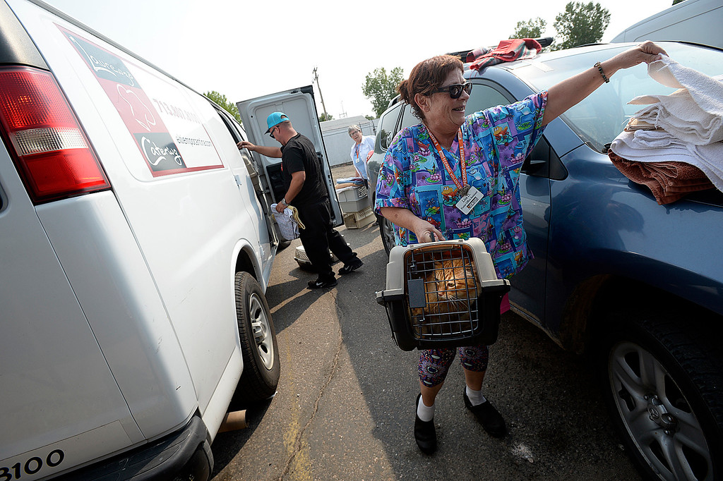 . Volunteer Lisa Dobel grabs a towel to cover a cat carrier as she takes the cat into the Fort Collins Cat Rescue Friday, Sept. 8, 2017, after it was unloaded from a van. The cat rescue received 52 cats and kittens from a shelter in Houston.  (Photo by Jenny Sparks/Loveland Reporter-Herald)