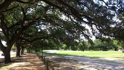 Beautiful Live Oaks next to the golf course.