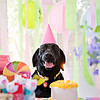 Houston-Pet-Photographer-Dog-Birthday-C-Baron-Photo-001