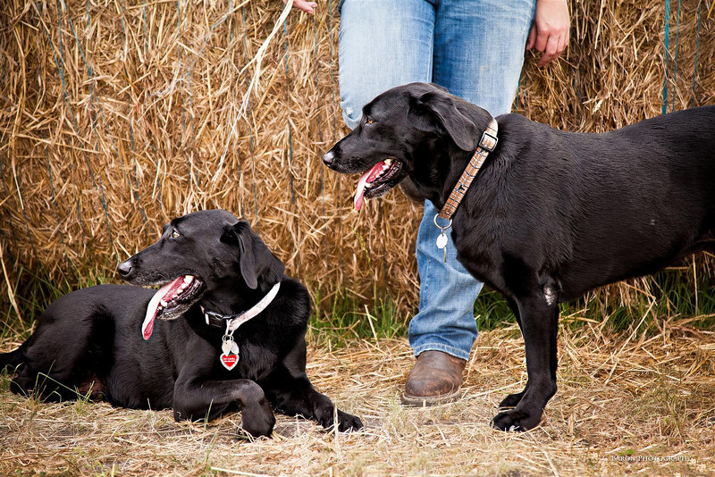 Brenham-Portrait-Pet-Photographer-Dog-C-Baron-Photo-001