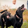 Brenham-Portrait-Photographer-Dog-Pet-C-Baron-Photo-002