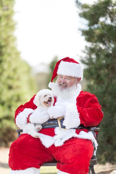 Fun Holiday Mini Sessions at a Christmas Tree Farm with Santa Claus