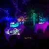 Zoo Lights 2013