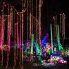 HZI Zoo Lights-8983