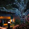 HZI Zoo Lights-8923