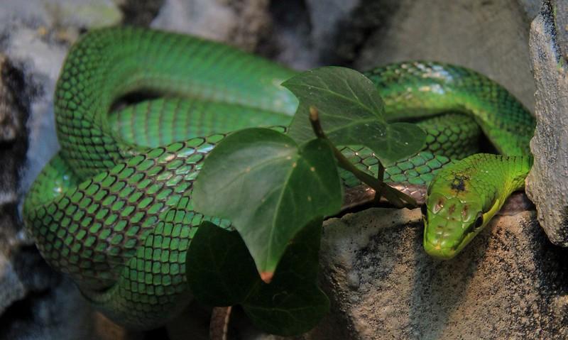 Unidentified snake.
