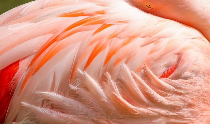 Flamingo study.