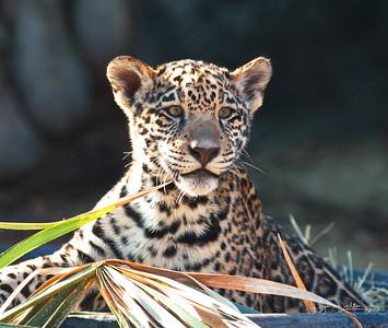 Houston Zoo  1-6-18
