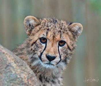 Houston Zoo   2-3-18