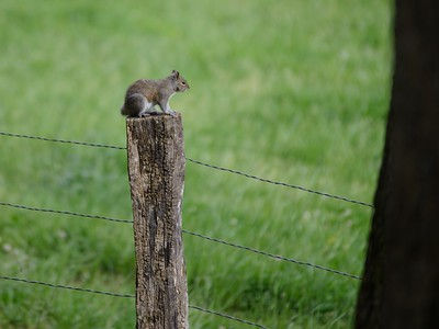 Hover Squirrel / The most interesting squirrel in the world