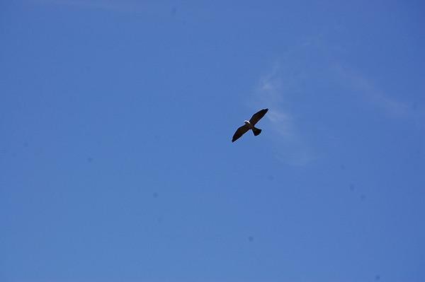 Journal Site 100:  Kite Trail & Narrows Trail, Wichita Mountains NWR, Indiahoma, Oklahoma - May 31, 2008