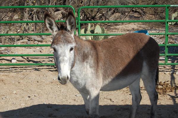 Journal Site 112:  Forever Home Donkey Rescue, Cascabel, AZ - December 6, 2008