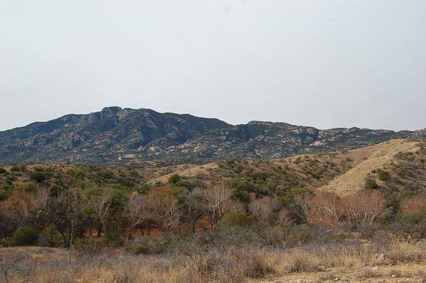 Journal Site 112:  Turkey Creek Hike, Coronado National Forest, AZ - December 7, 2008