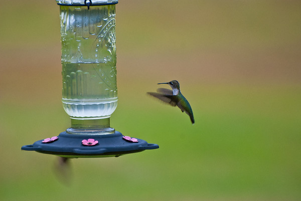 Hummers in Virginia