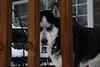 Eye of the Snowdog